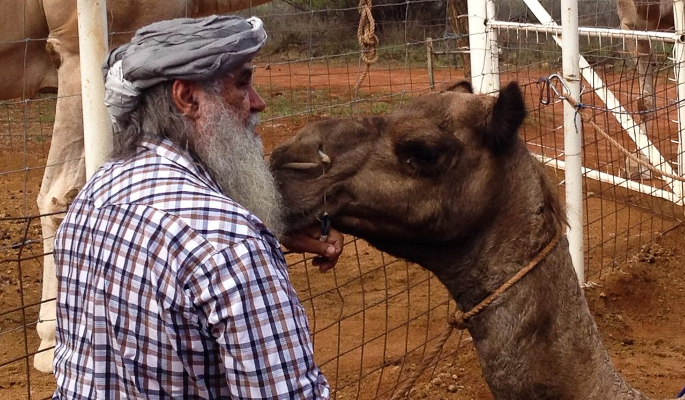 Pyndan Camel Tracks' Ruby shares a tender moment.