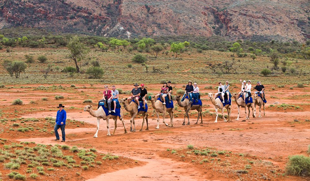 Exploring the outback ochre terrain aboard Trillion, Pixie, Dock, Ruby, Saleh, Anna and Odin from Pyndan Camel Tracks, south west of Alice Springs.