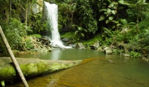 Great for a rainforest mini break, Mount Tamborine, Queensland