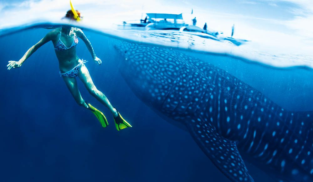 The ultimate wildlife encounter? Swimming with the whaler sharks of Ningaloo