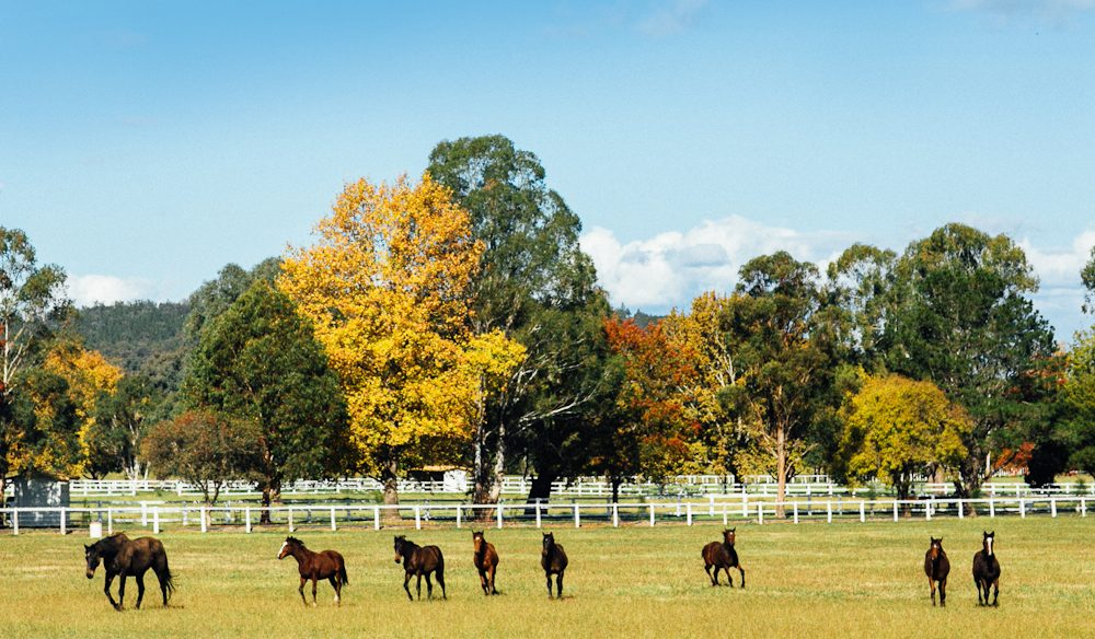Horses for courses - The beautiful grounds of Gooree Park Wines, Mudgee