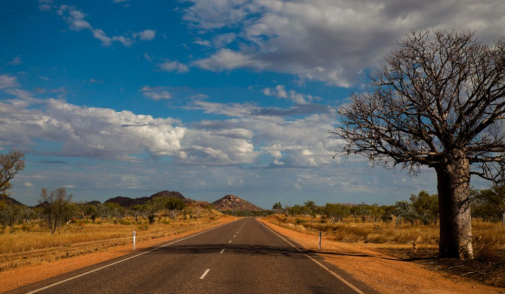 The widest open spaces: Boab trees keep you company on the Gibb River Road in the Kimberley.