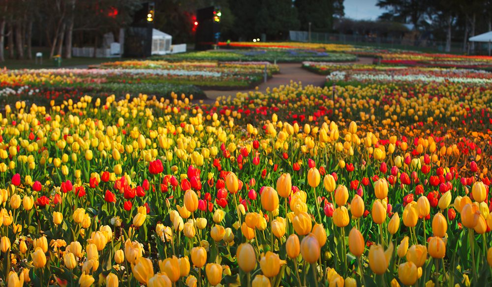 Floriade The Biggest Blooming Show In Australia