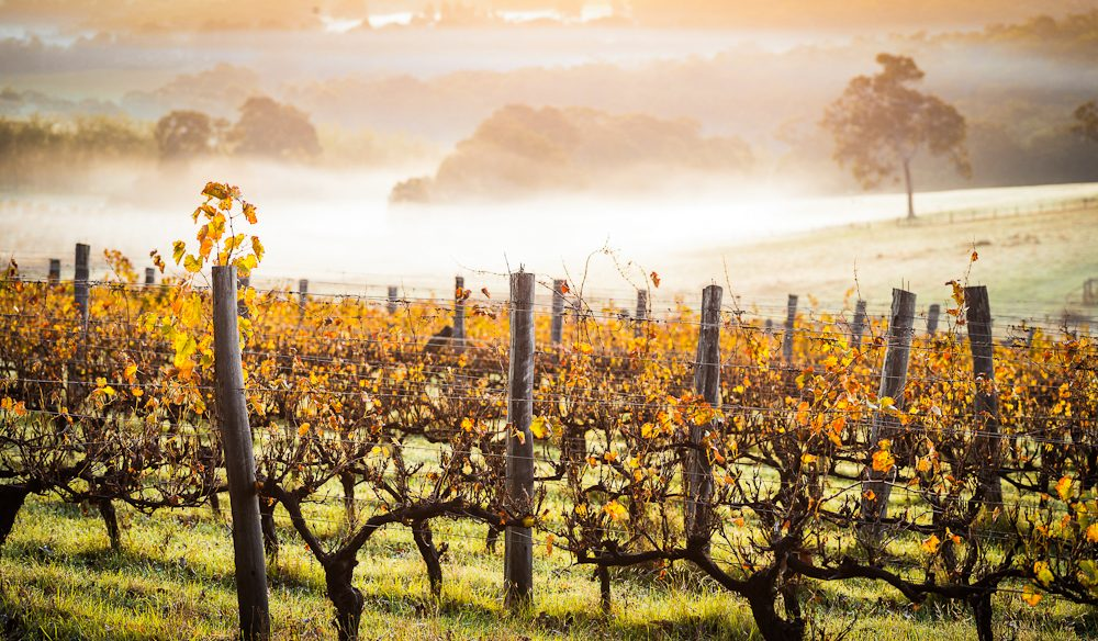 Wine country stopover: The vineyards of Margaret River.