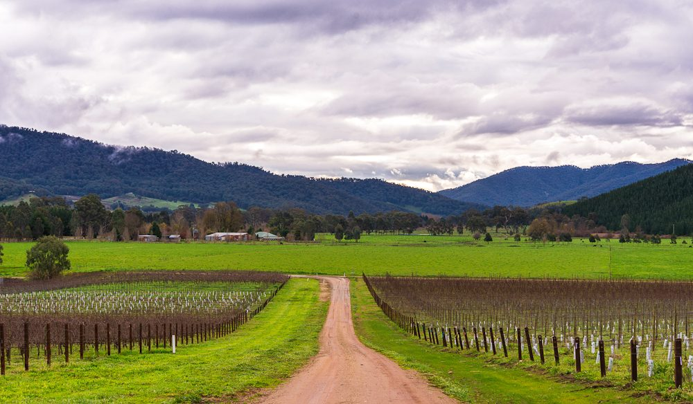Cycling through the Victorian High Country vineyards. (Photo: Bec Taylor).