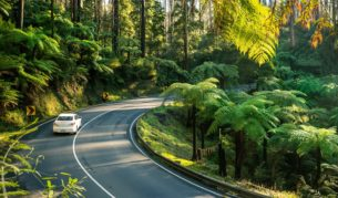 The Black Spur on the way from Melbourne to Marysville, one of the best drives in Australia.