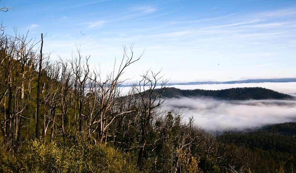 Misty views from Keppel Lookout, Marysville (Photo: Steve Madgwick)