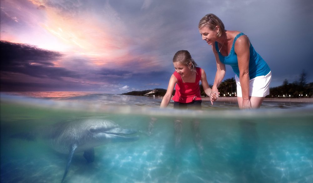 Dolphin encounter - Tangalooma Island Resort, Moreton Island Resort, Queensland.