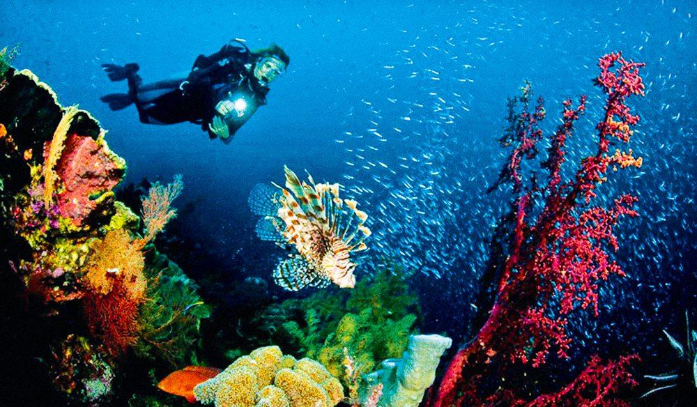 Underwater exposed - Undersea photography course - Port Stephens, NSW.