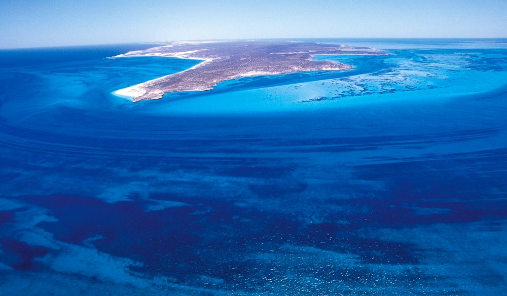 Snorkelling sensory overload: Dirk Hartog Island, South Passage, off WA's Shark Bay.
