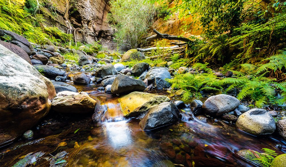 The (Carnarvon) gorge shelters plants found nowhere else in inland Australia, and a startling array of wildlife.