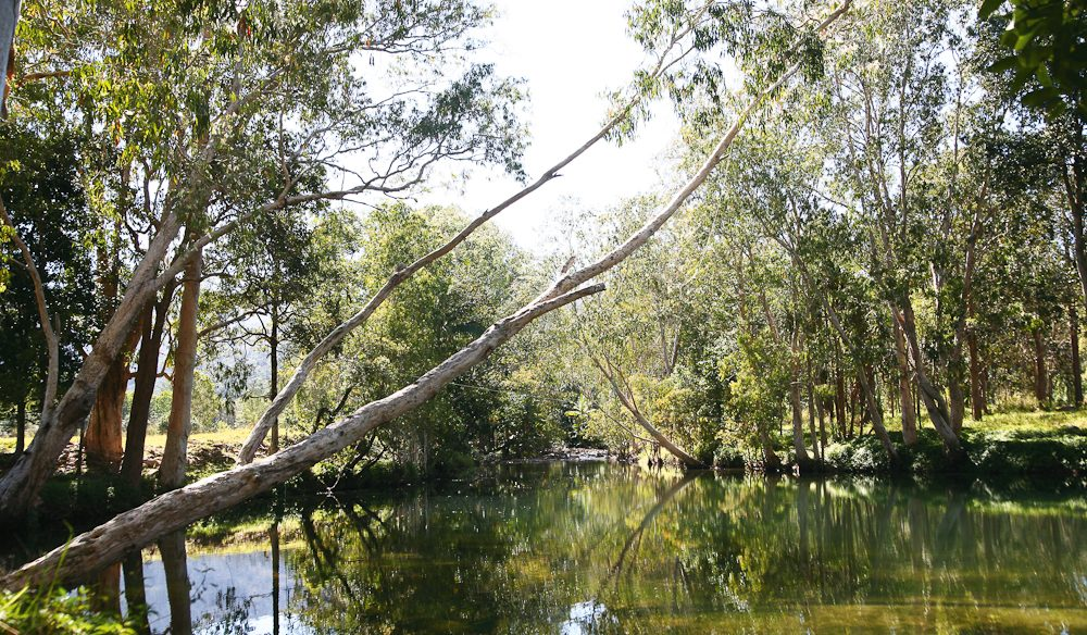 The dive site for the platypus hunt - Finch Hatton Creek (photo: Steve Madgwick)