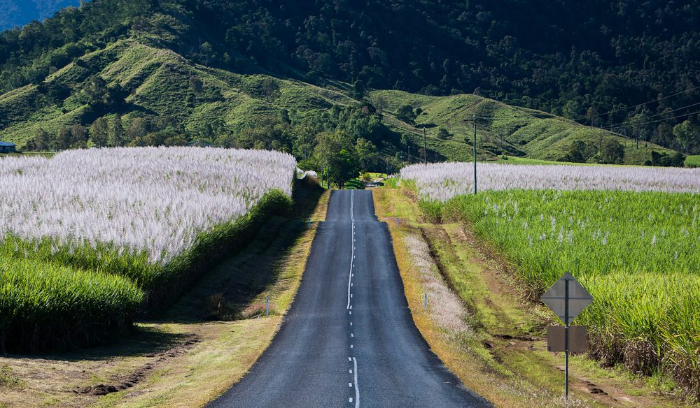 'Cane-field' highway - the road from Mackay to Eungella NP, central Queensland.