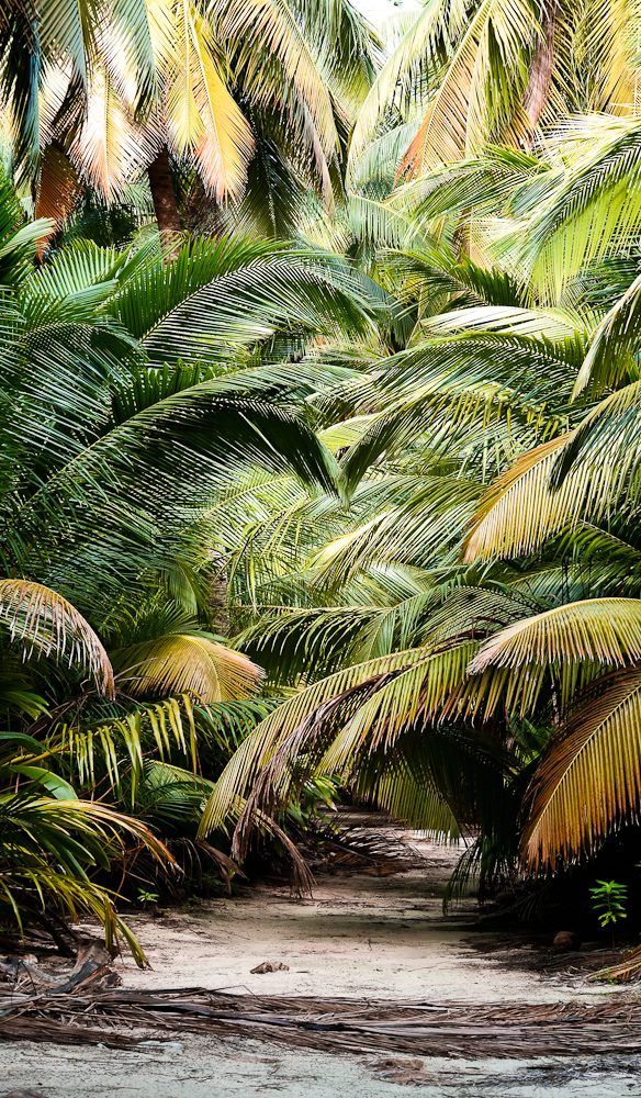 Virtually the entire Cocos Keeling atoll covered with palm forests and pretty little paths like this one.