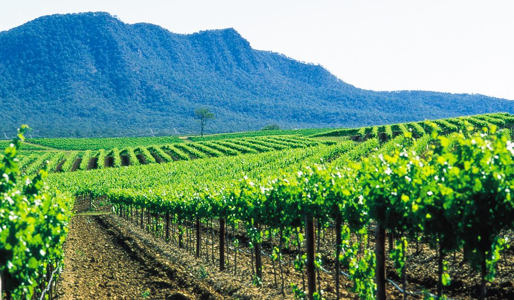 Hunter Valley wins - by two votes - over Margaret River.