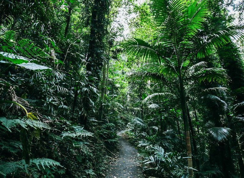 Deep in the cool of the Dorrigo National Park (photo: Elise Hassey).