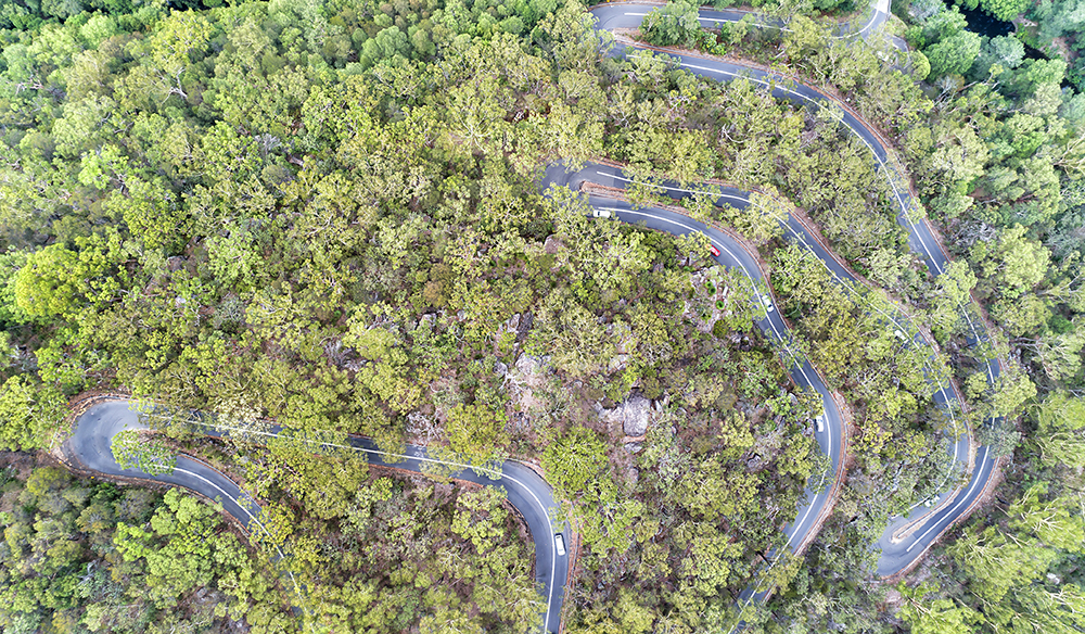 Remote winding turning road through gum-tree woods