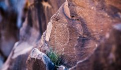 Ancient canvas: Indigenous rock art Sacred Canyon, Flinders Ranges.