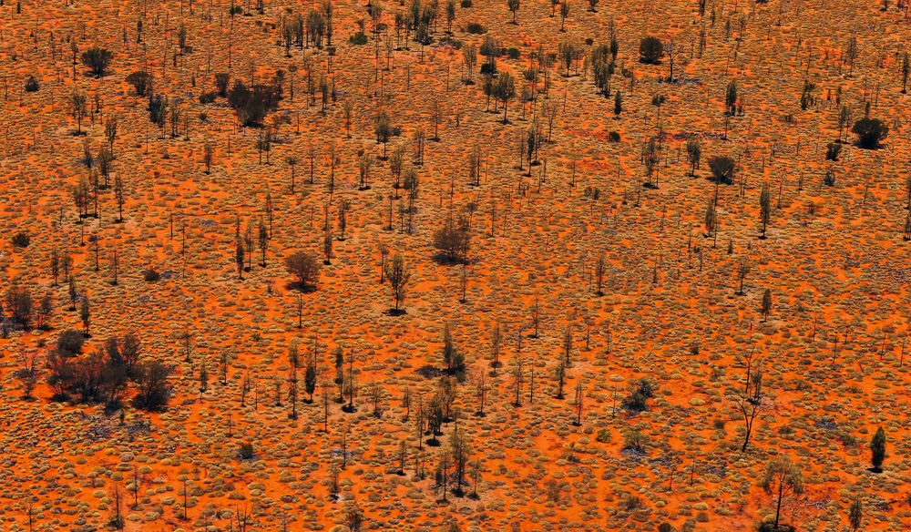 The endless subtle patterns of the Red Centre (photo: Elise Hassey).