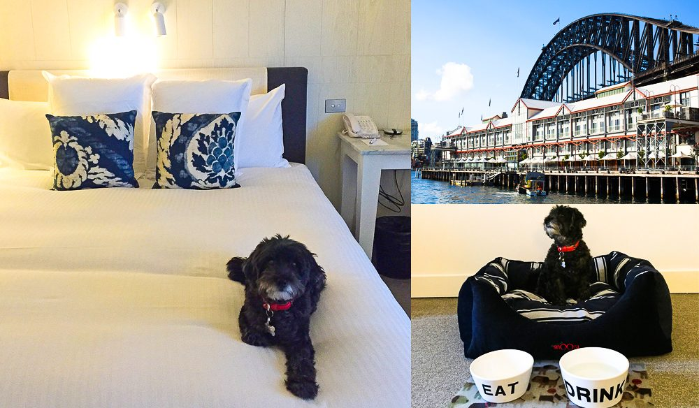 Kingston considers his kingdom: Pier One Sydney Harbour hotel.