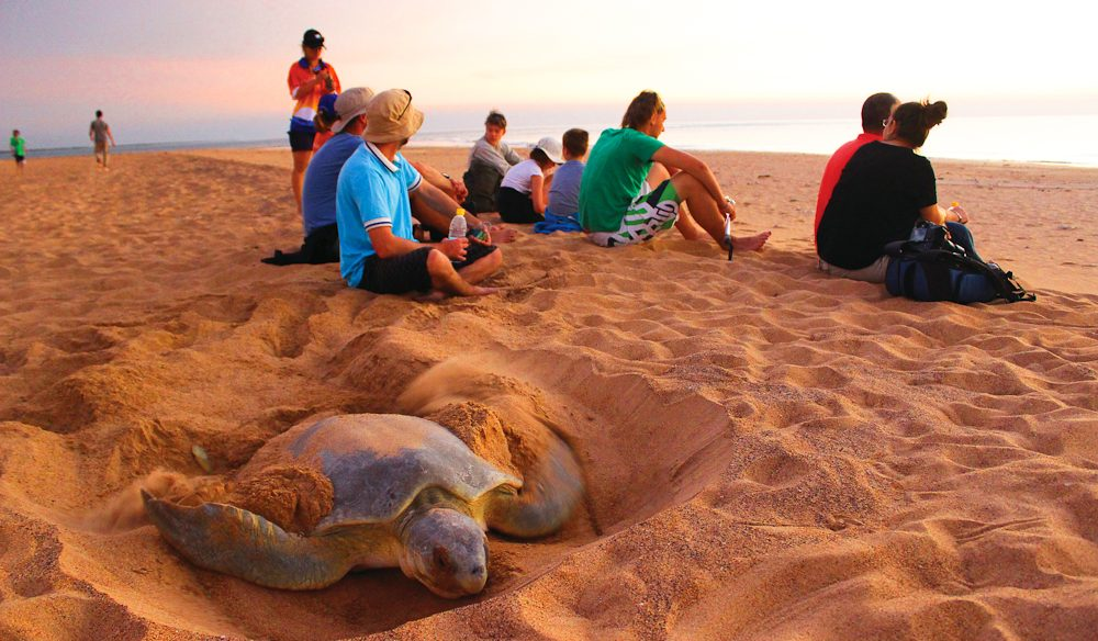 Turtle Tracks Tour, Darwin Harbour