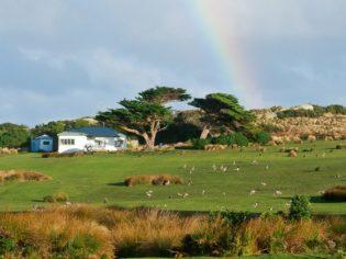 Tasmania's Three Hummock Island