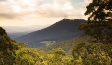 The Dandenong Ranges