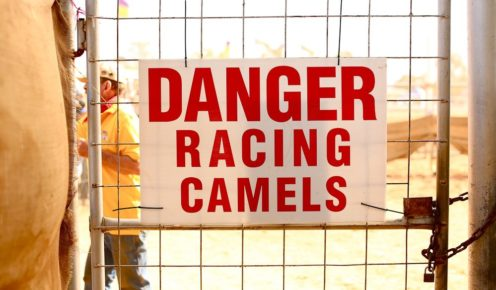 Beware the racing camels, Camel Cup, Alice Springs (photo: Jennifer Pinkerton).