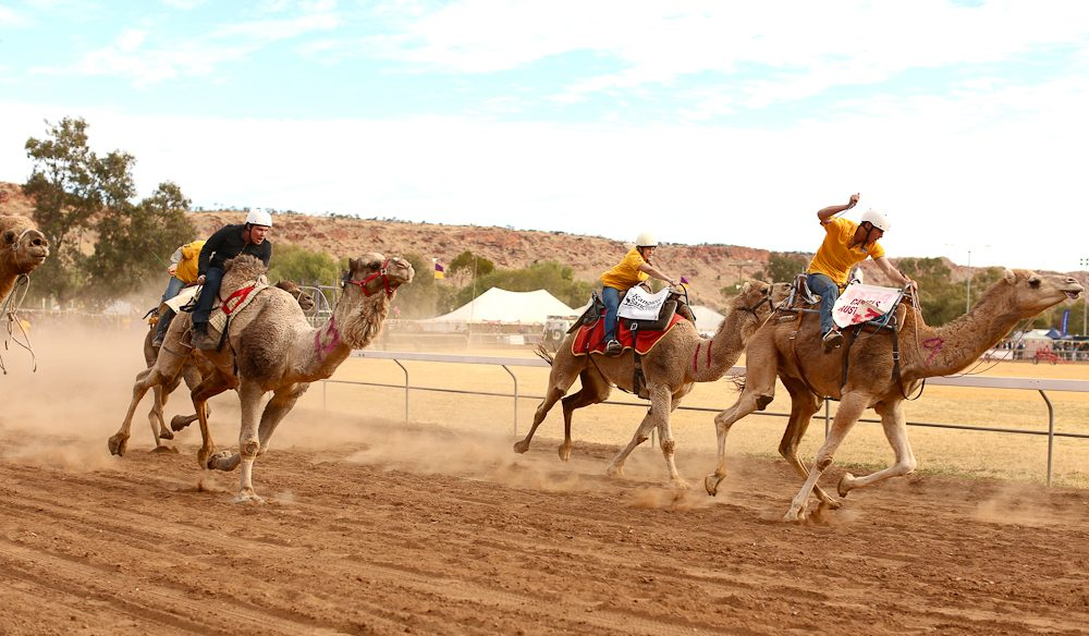 Over the hump: the Camel Cup finish line (photo: Jennifer Pinkerton).