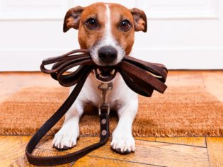 Packing for pet travel