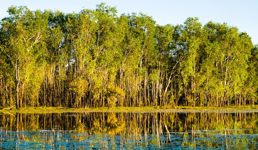 Something's fishy: Kakadu National Park.