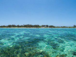Lady Elliot Island snorkelling is incredible