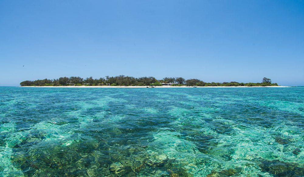 Lady Elliot Island: