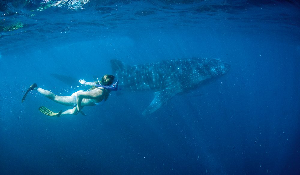 Whale shark central, Ningaloo Reef.