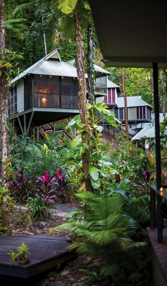 Daintree eco lodge luxury accommodation