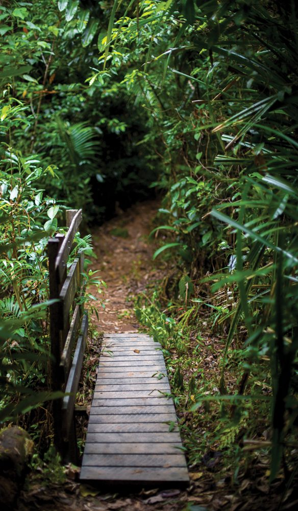 Daintree pathway to the ancient... (photo: Tammy Law).