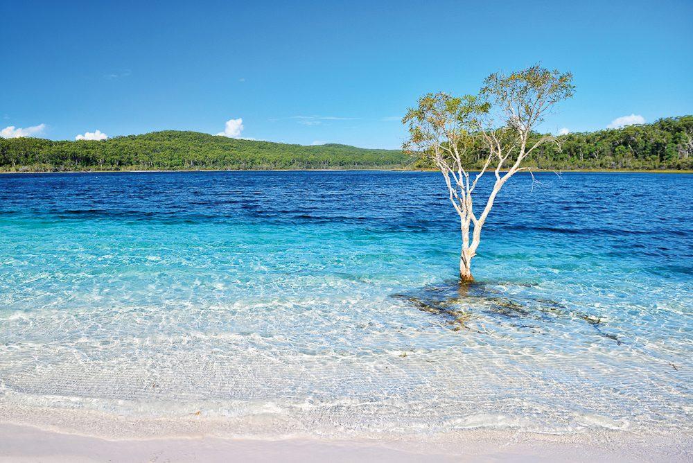 Tree-mendous - Lake McKenzie, Fraser Island.
