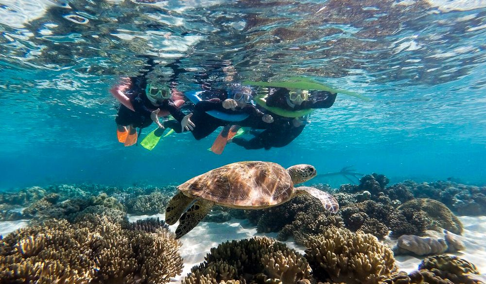 Turtle encounter: Amzing what you see when you snorkel the reef by the rainforest.