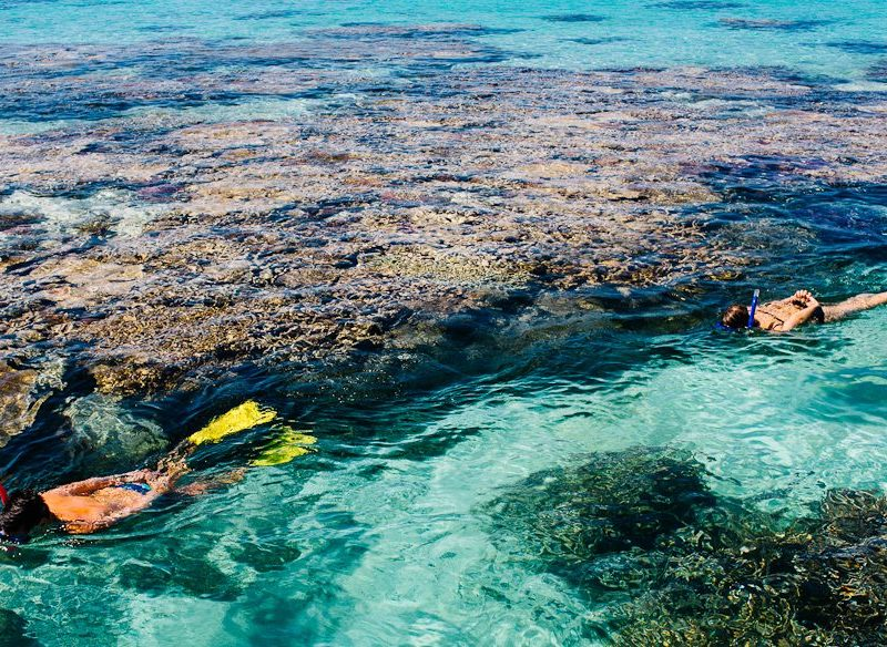 Snorkelling/diving the Great Barrier Reef