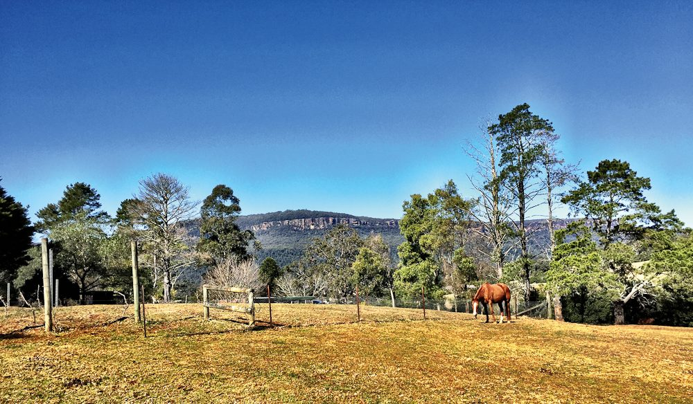 Wine with a view: Yarrawa Estate, Kangaroo Valley (photo: Megan Arkinstall).