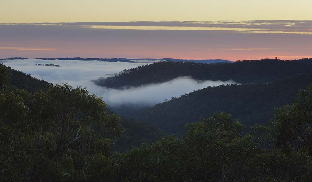 Morning sunrise, fog was blanketing the park.