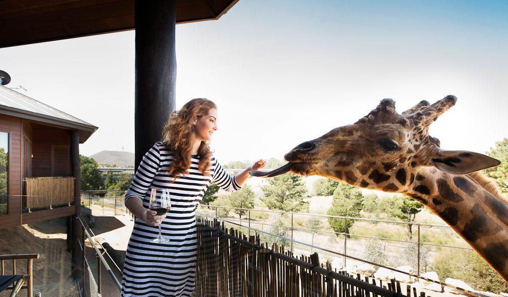 Jamala's resident giraffe, Hummer.