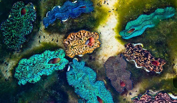 Produce at a clam farm - Cocos Keeling Islands.