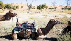 When the music dies down perhaps it's time for a camel ride.