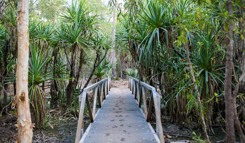 The footbridge at the end of the Bitter Springs loop in Elsey National Park (photo: Jennifer Pinkerton).