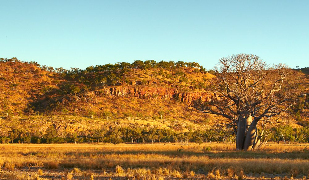 The 160,000-hectare Bullo River Station is a wilderness of red escarpments marked with boab trees (photo: Ewan Bell).