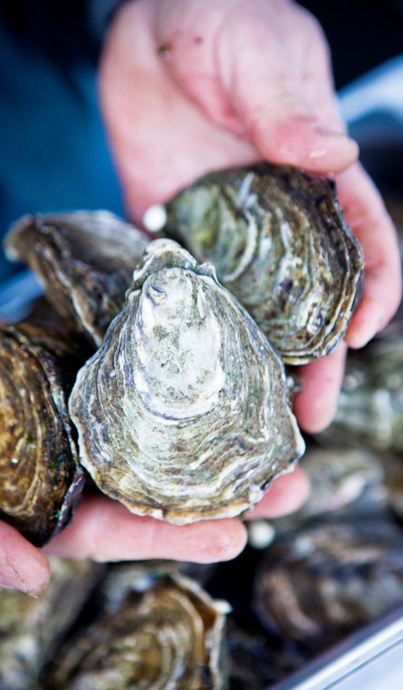 Bruny Island oysters to go, Hobart Farm Gate Market.