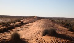 The Big Red Dune with the Simpson Desert to the left and the stage off to the right (photo: Steve Madgwick)