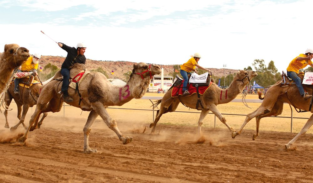 Hump day - Alice Springs Camel Cup (photo: Jennifer Pinkerton).