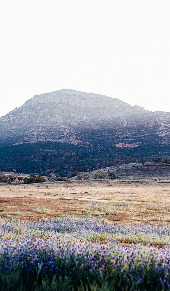 Bridle Gap hike dissects the magnificent Wilpena Pound (photo: Elise Hassey).